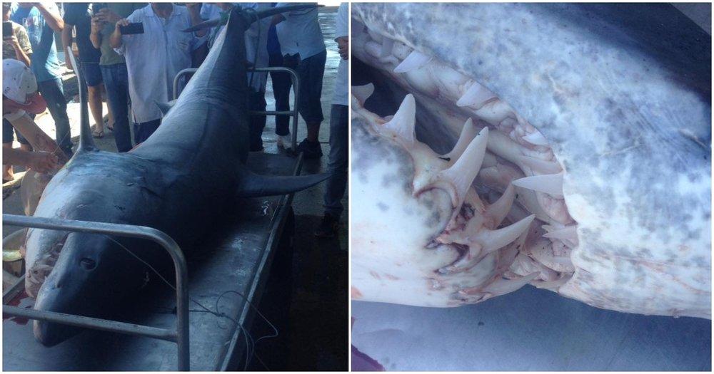 shark-sesimbra-portugal.jpg