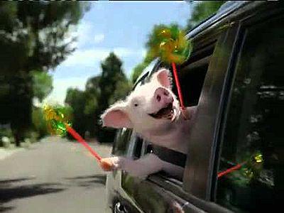 This little piggy — Sally H. Hall