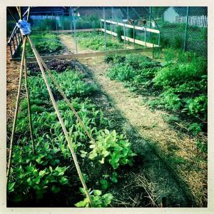 splitlog farm