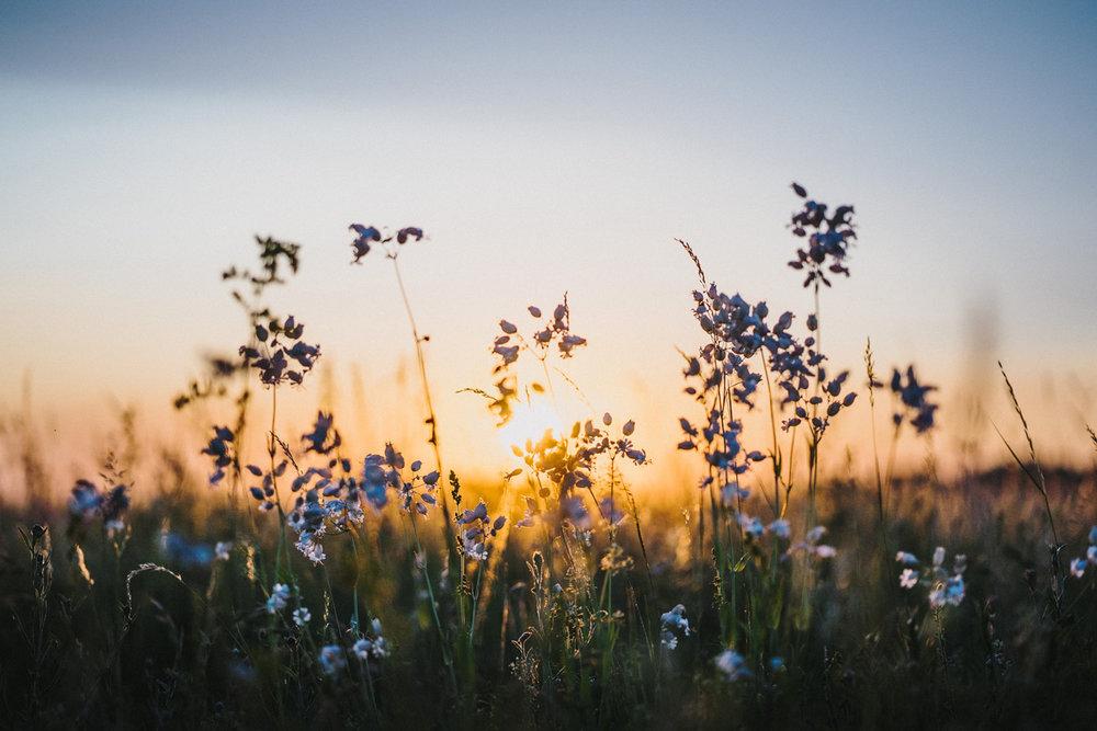 wildflowers-bjoernwunderlich.jpg