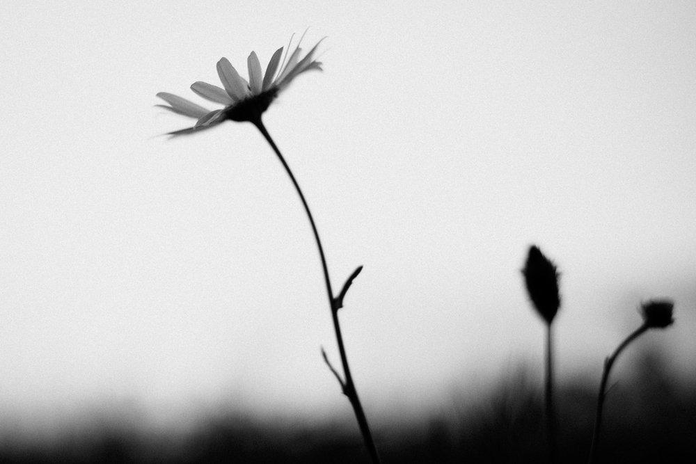 natur-bjoernwunderlich-04.jpg