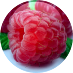 Raspberry-Fruit-Complex-18.01.2016-150x150.png