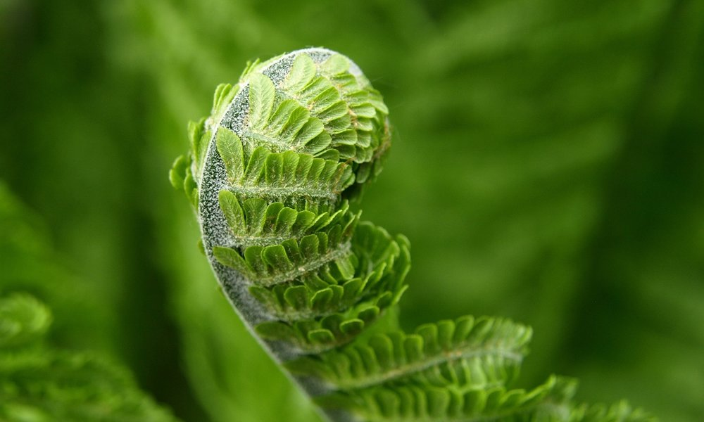 close-up-fern-green-56852.jpg