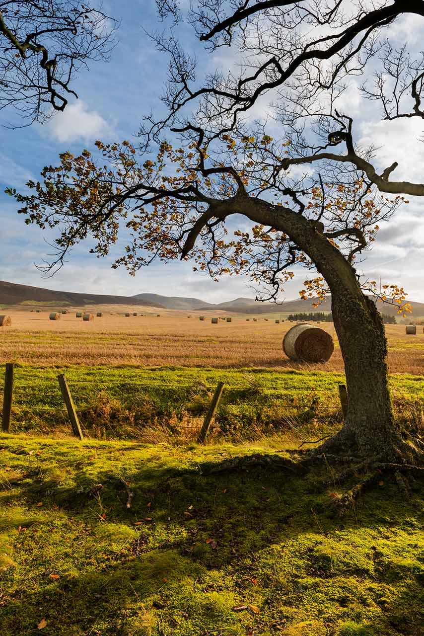beech-harvest-pentlands-1280-wee.jpg