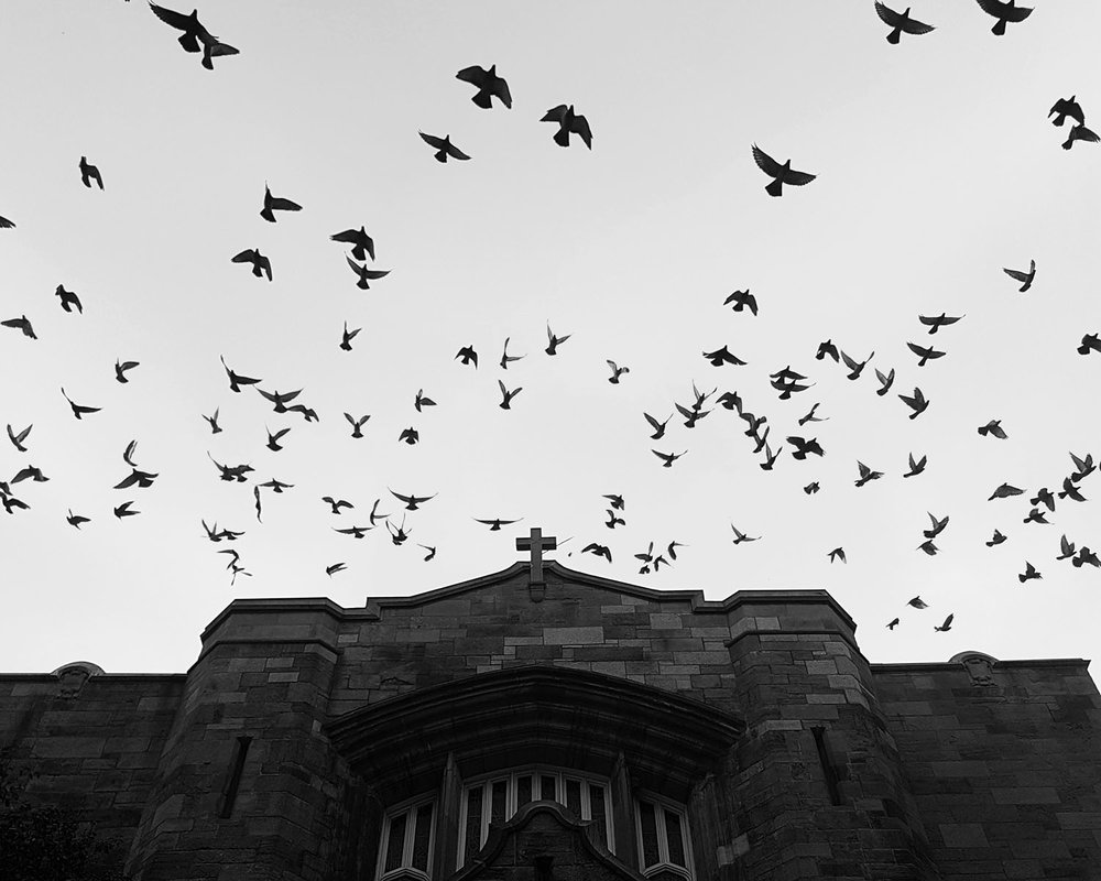 birds church-7.jpg
