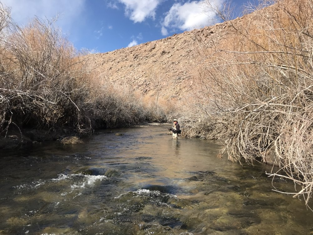 The power plant section of the lower Owens River is heavily lined with willows restricting access to fly fishers willing to wade in the river bed.