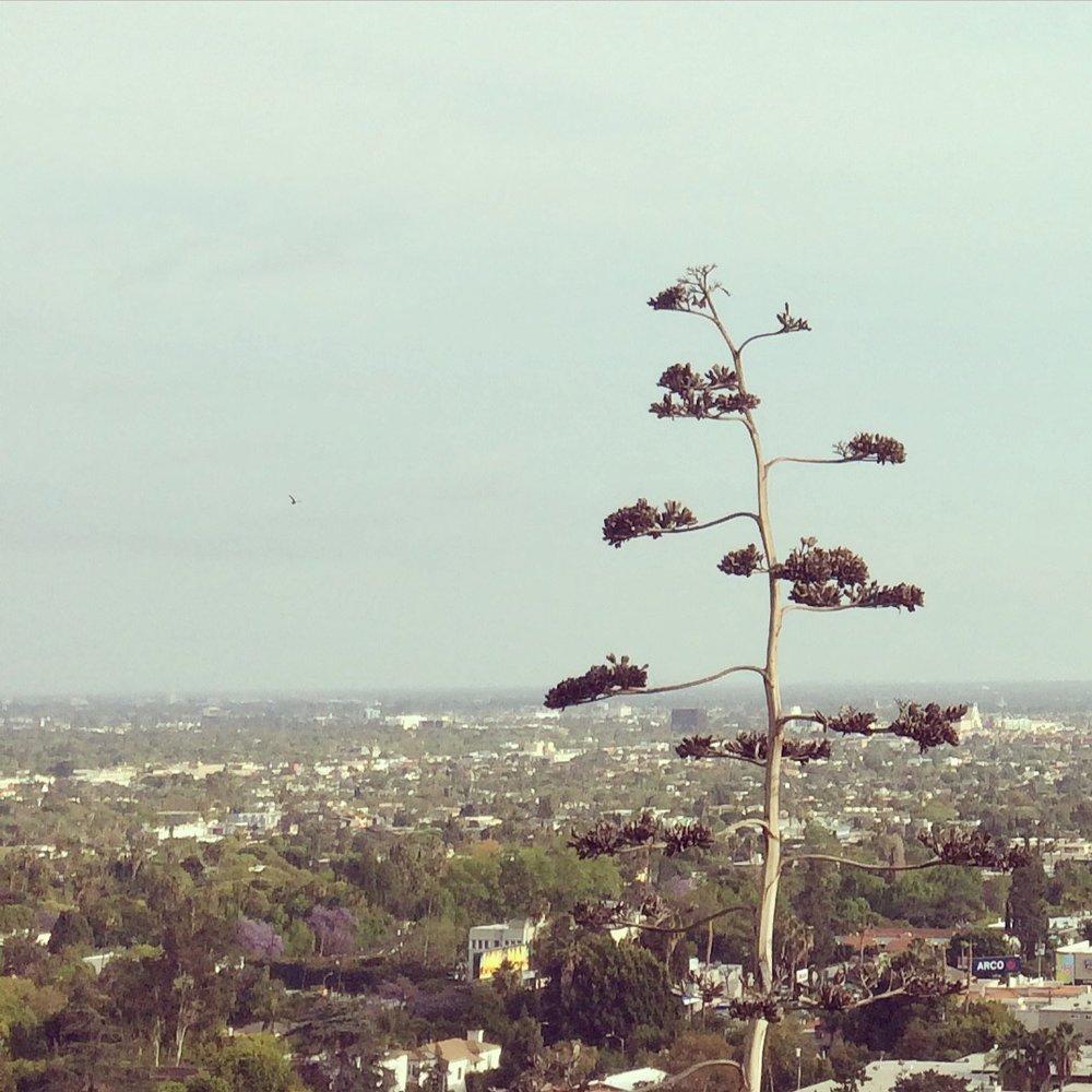 Hilltops.jpg