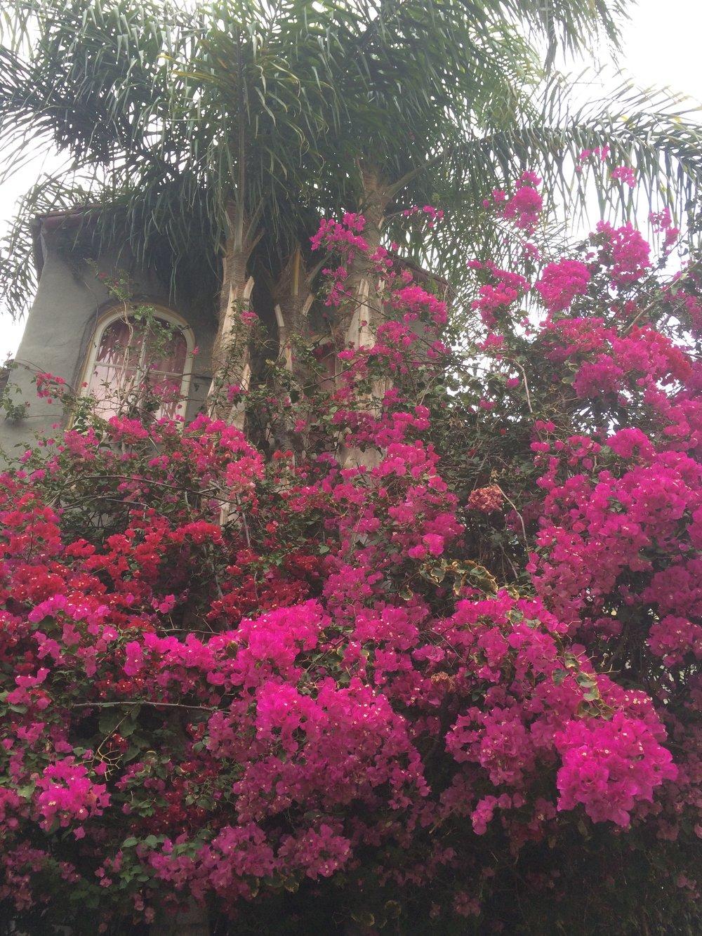 Lush flowers.jpg