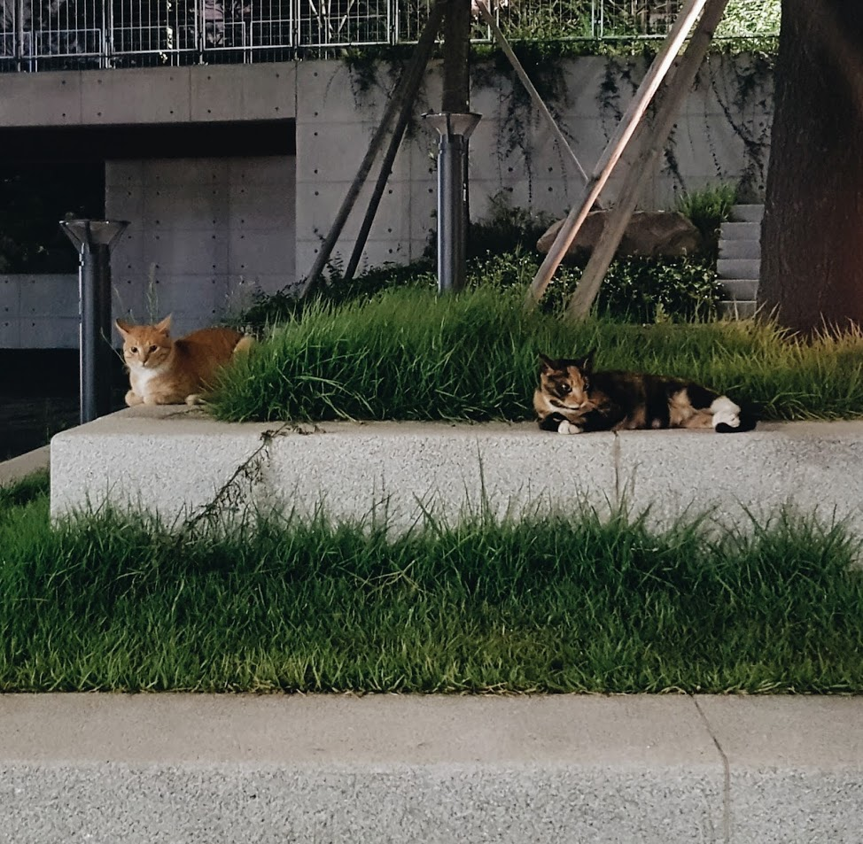 - I had two cats called Jindo and Kaos. They live in my lovely neighborhood, Gyeongui Line Forest Park, with the foods that my neighbors give.