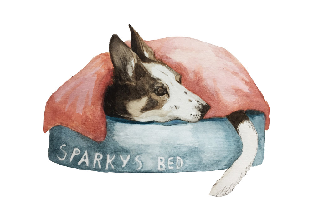 Illustration of Sparkie by Hannah, Scottish tours with walks, small group adventures, Roaming Scotland.jpg