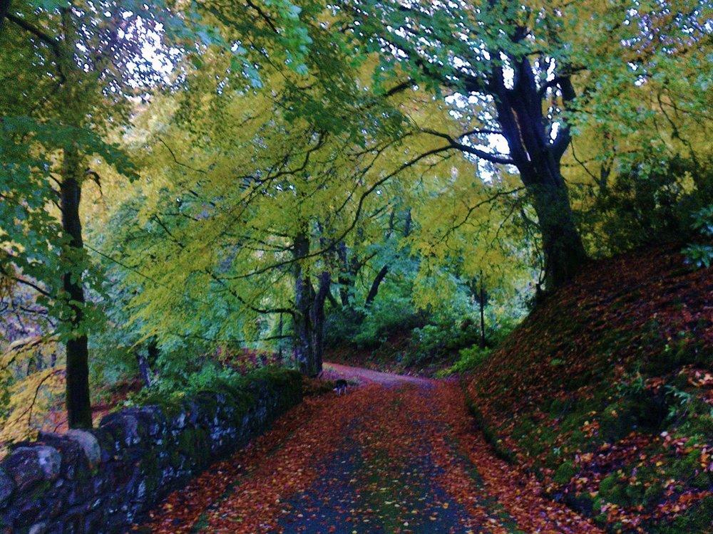 Perthshire Autumn 055.jpg