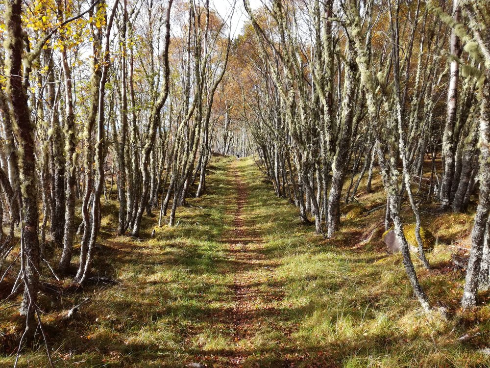 Path through the woods -  Tour & Walk in small groups - Roaming Scotland.jpg