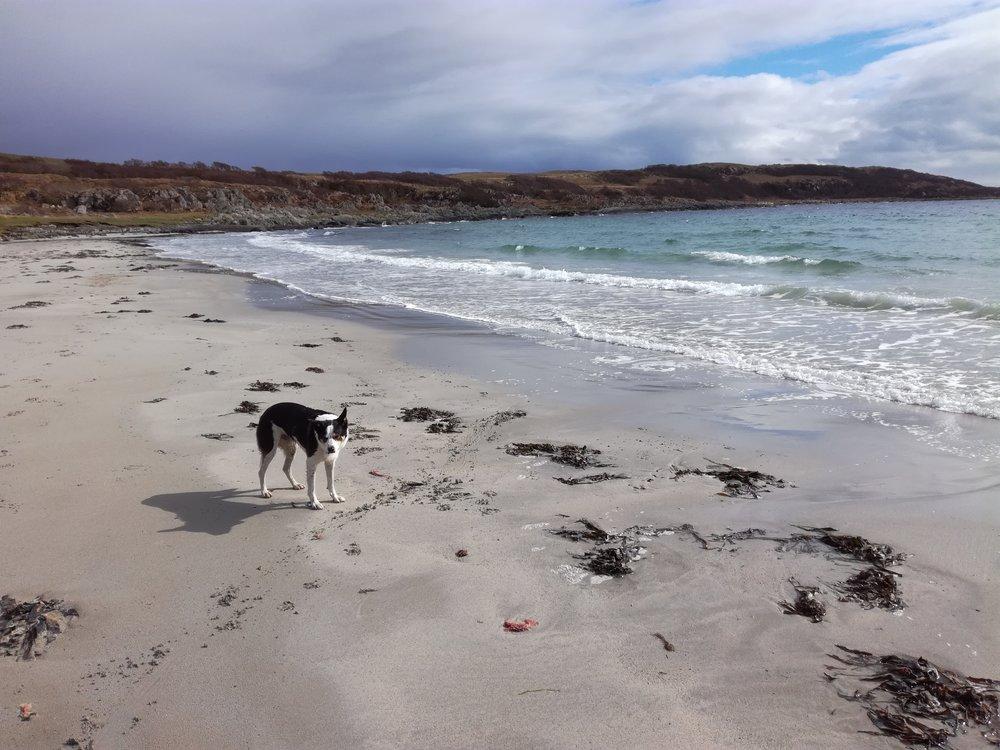 Sandy Bay on Loch Sween, Argyll -  Tour & Walk in small groups - Roaming Scotland.jpg