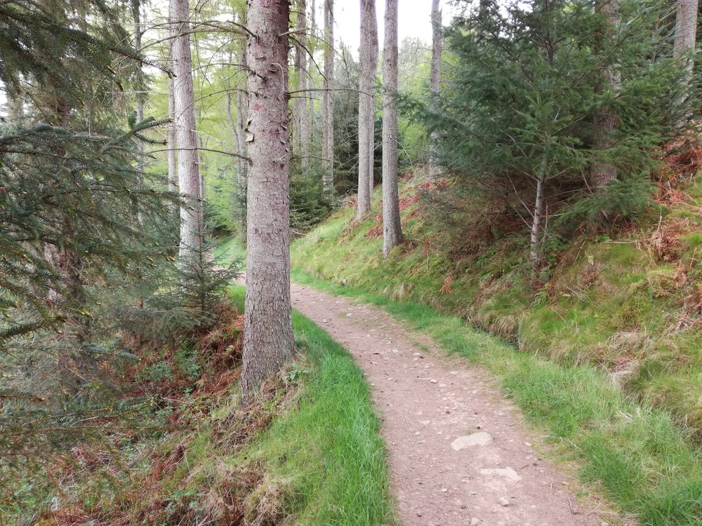 Forest walk above Tweed, Borders -  Tour & Walk in small groups - Roaming Scotland.jpg