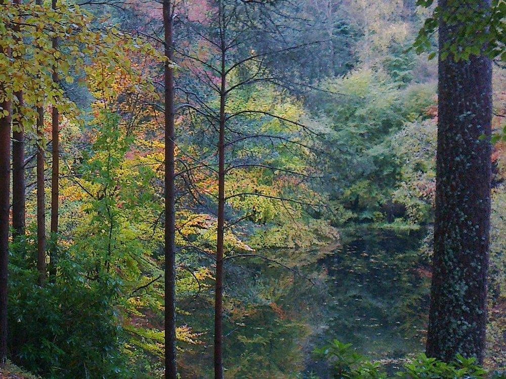 Forest scene, Borders -  Tour & Walk in small groups - Roaming Scotland.jpg