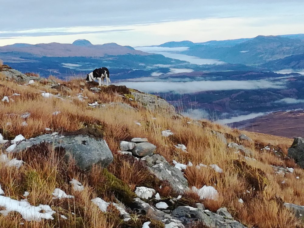 View from Ben Tee, Great Glen & Loch Ness, tours with walks, small group adventures, Roaming Scotland.jpg