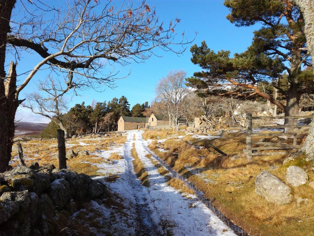 Cairngorm Mountains, Braemar -  Tour & Walk in small groups - Roaming Scotland..jpg