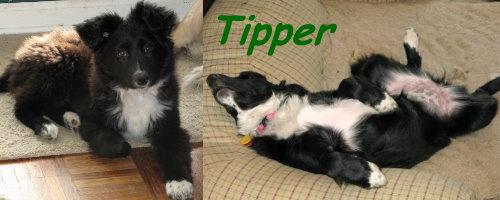 Tipper.jpg