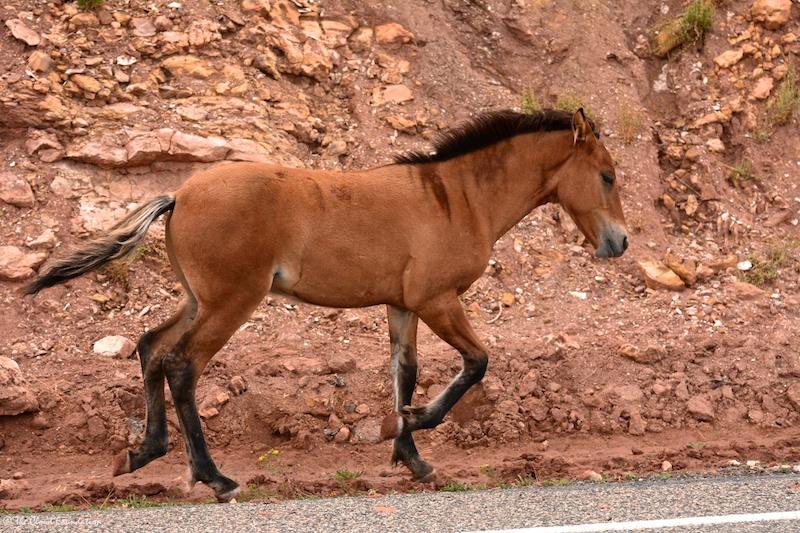 Oak, Hidalgo & Fresia's foal