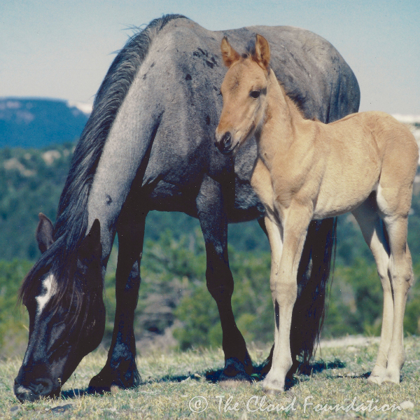 Sitka and her son, Mescalero, 1999