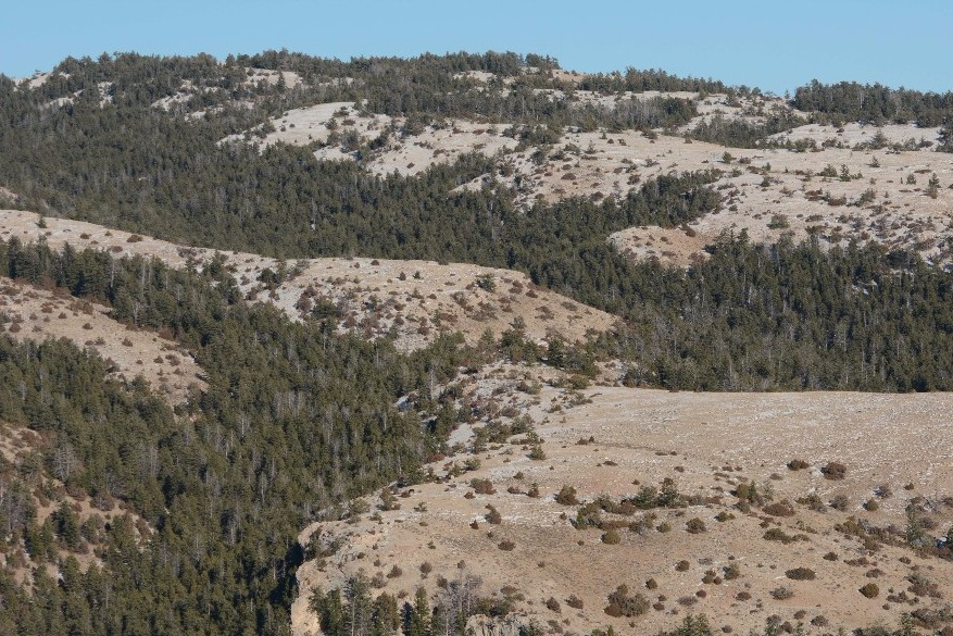 Mid-Sykes Ridge from Tillett Ridge