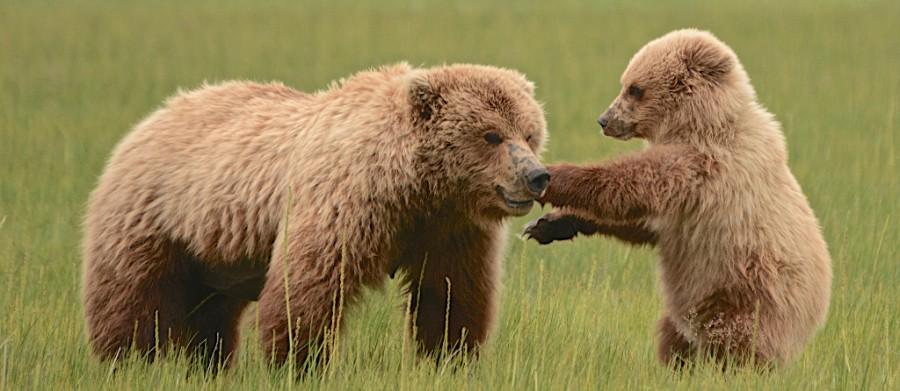 CubsPups1.jpg