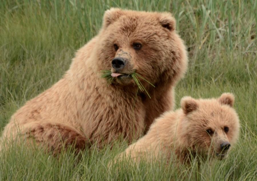 CubsPups2.jpg