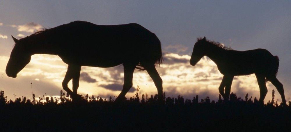 No Land No Horses.jpg