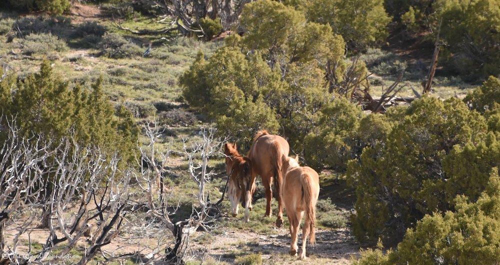 Nova, the foal, and Prima