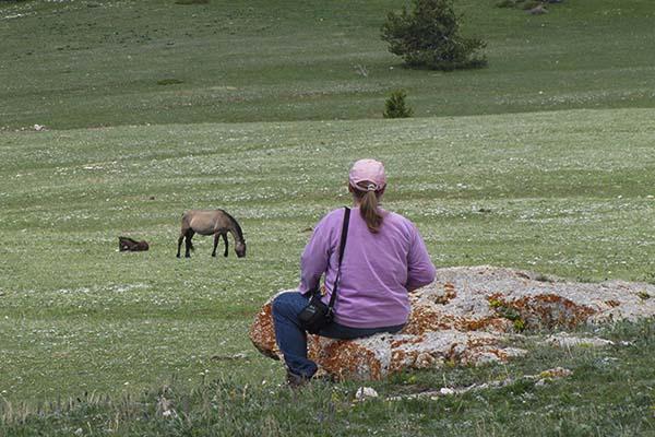 Visit a Herd.jpg