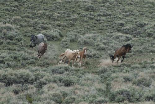 Visit a Herd 2.jpg