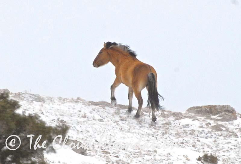 Kemmerer walks over a ridge.