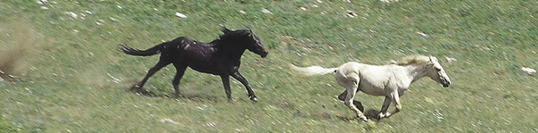 Mateo chases Cloud, ultimately pulling out a piece of his tail. 7.1999