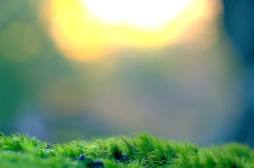moss-983908_1280.jpg