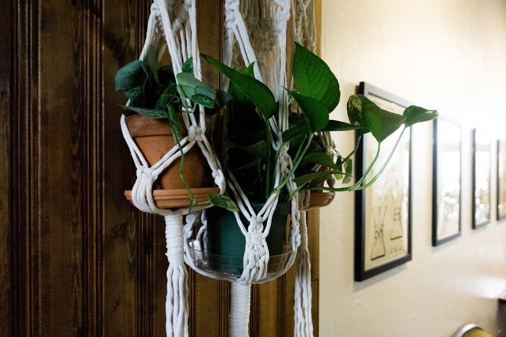 Pothos (one of the plants we used most during this project) finds a new home in a custom macrame wall hanging.