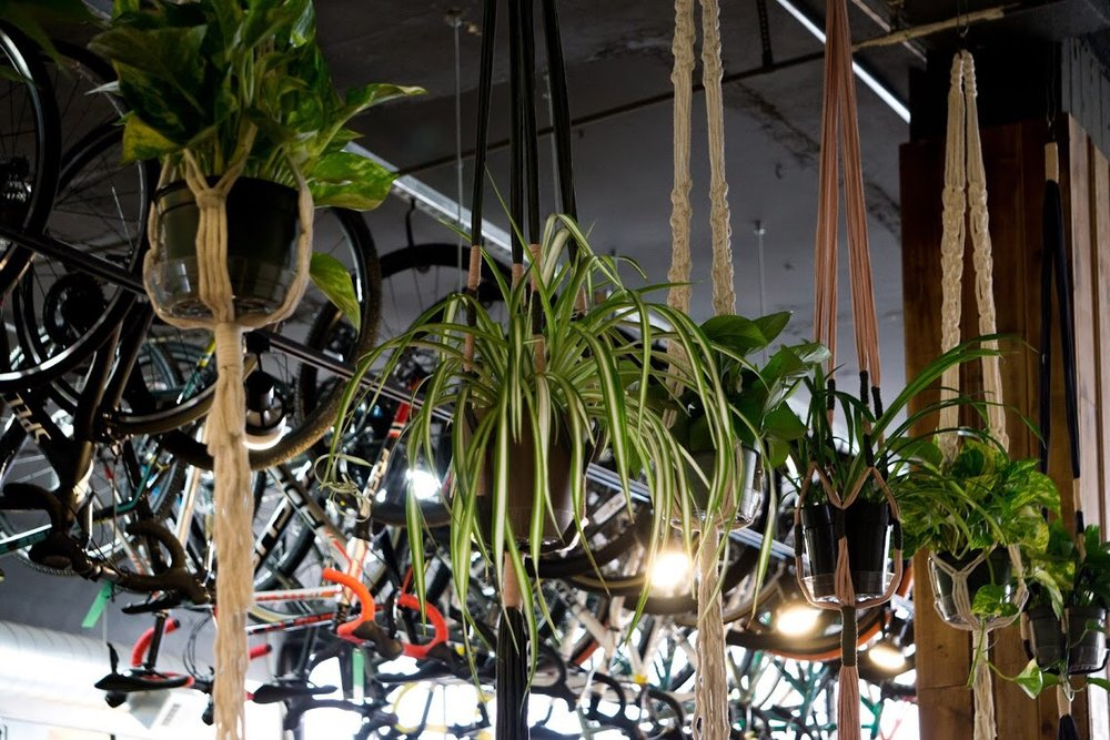 "Custom macrame plant hangers hold pothos and spider plants and act as a living ""wall"" between the cafe and bike shop."