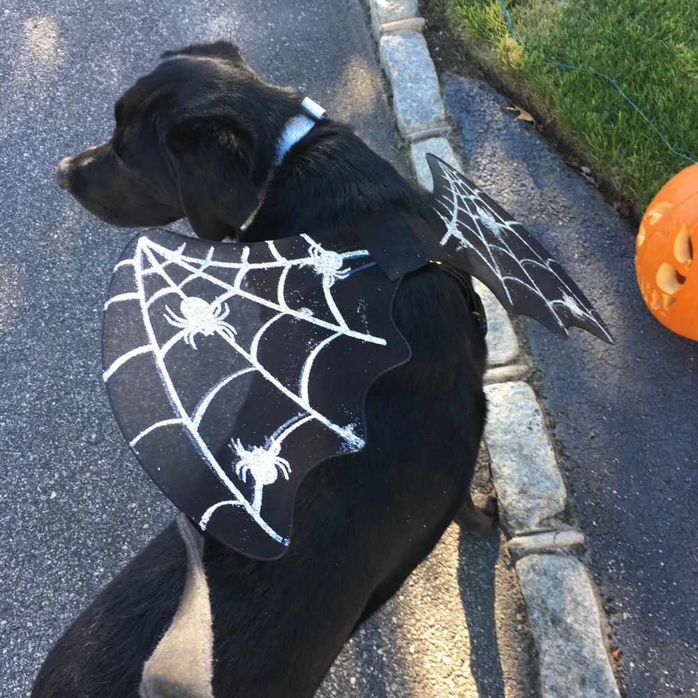 Sophie ready for halloween