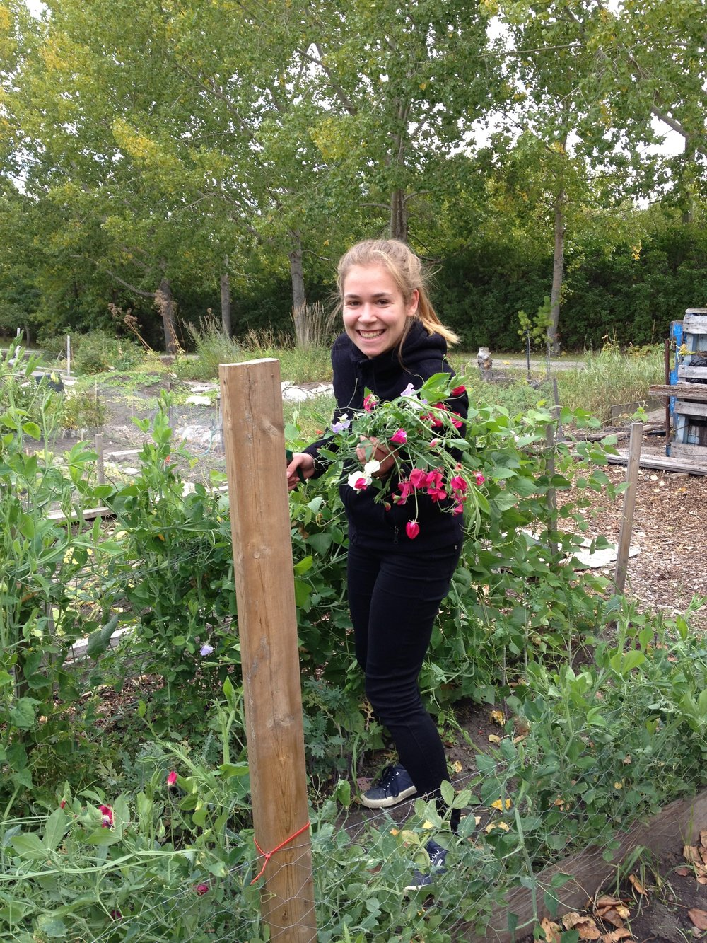 Hanna, our german WWOOFer (willing worker on an organic farm) - we didn't have a farm but we are pretty farm-ish folk,so it all worked out