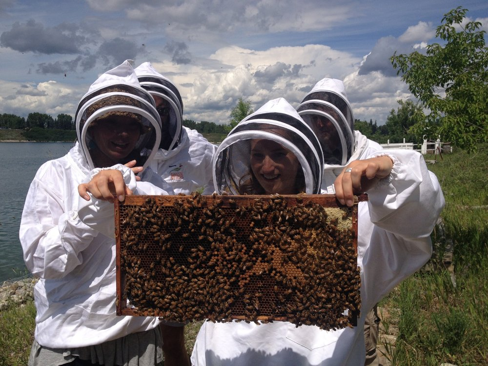 My team of osteopaths, learning beekeeping