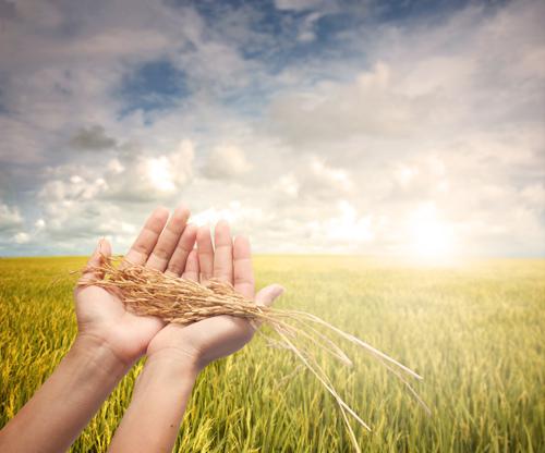 Harvest hands.jpg