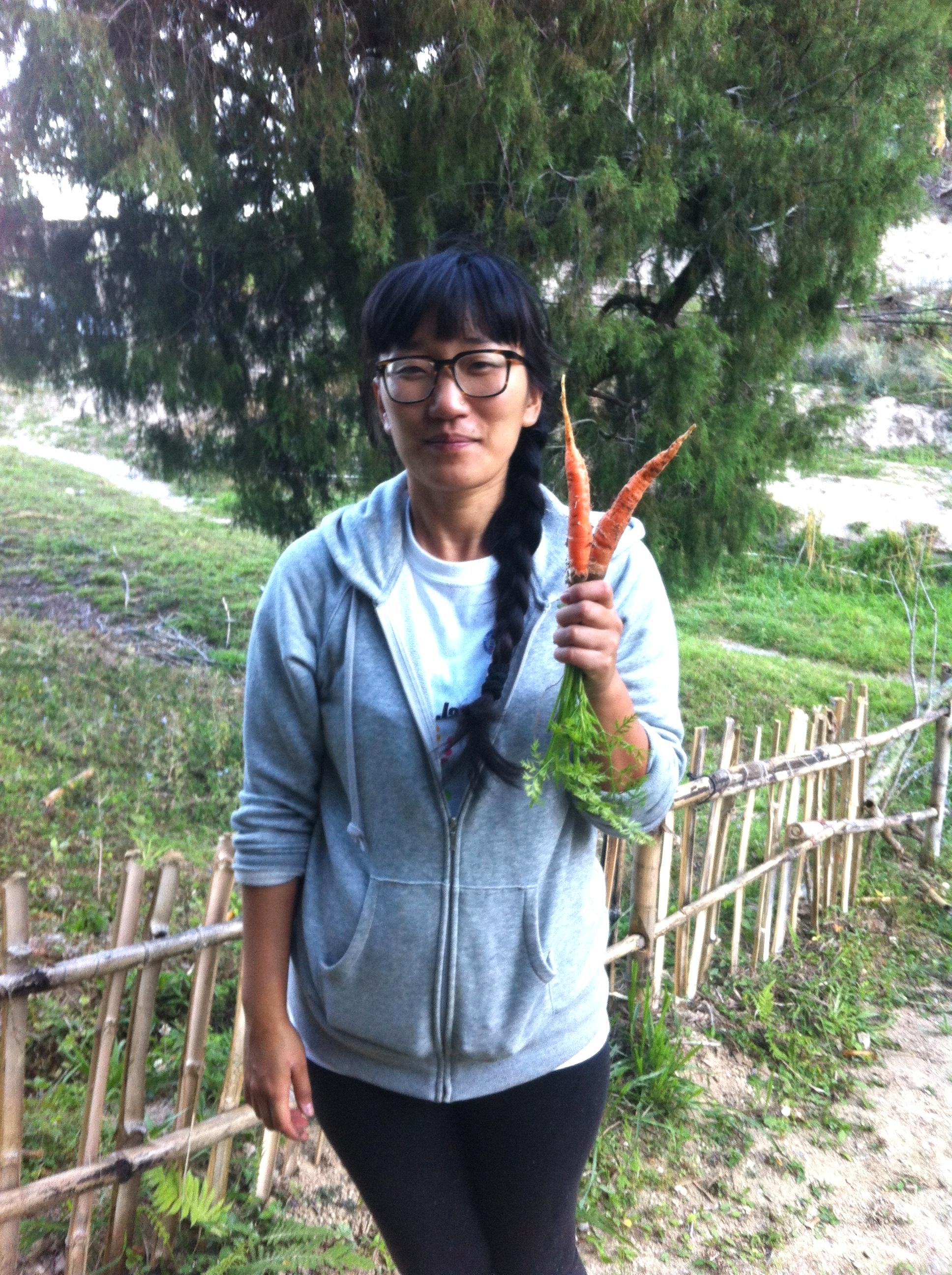 Carrot harvest!