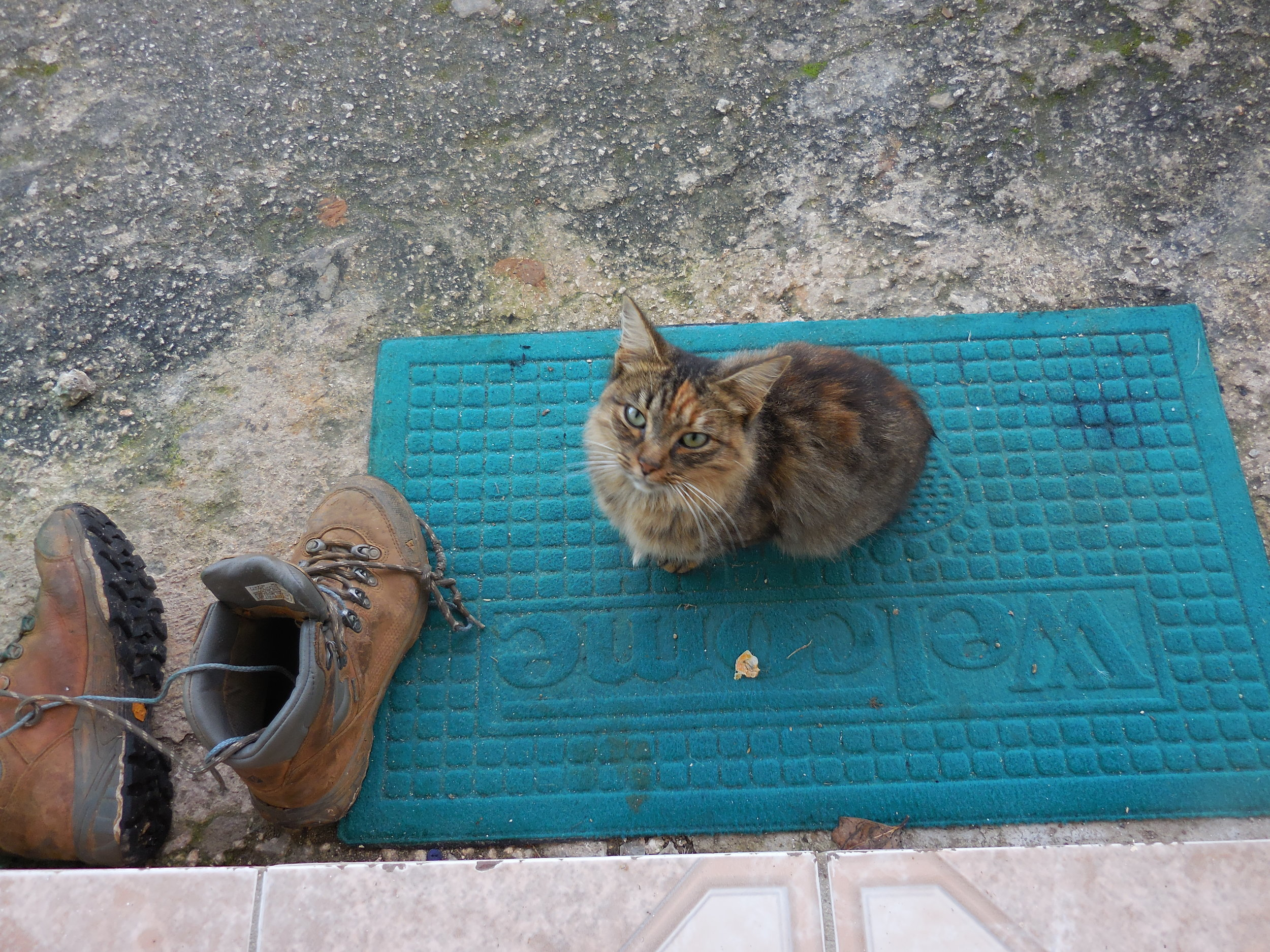 This cat took the Welcome mat literally.