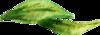 uncage love leaf at 150.png