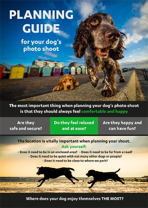 Dog Photographer - Rhian White- Planning guide to your dog's photo shoot