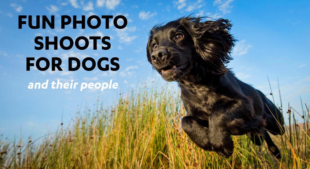 Dog Photographer Rhian White