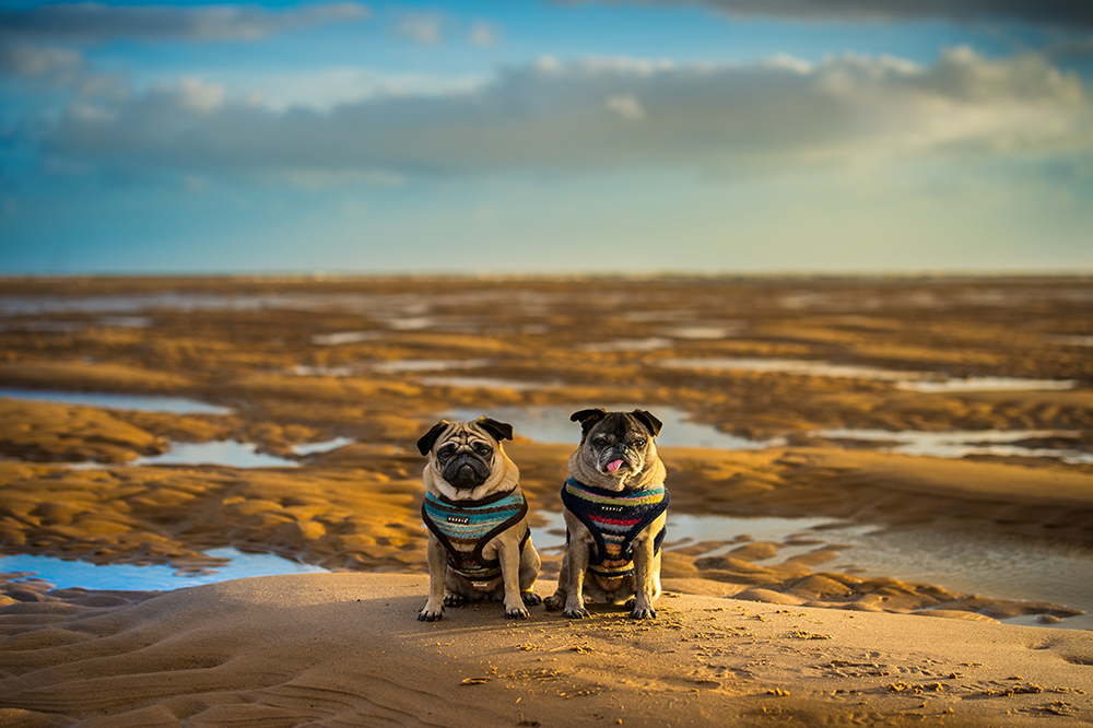 Betsy and Boo posing on the sands - this was taken at a very low tide at Orcombe Point
