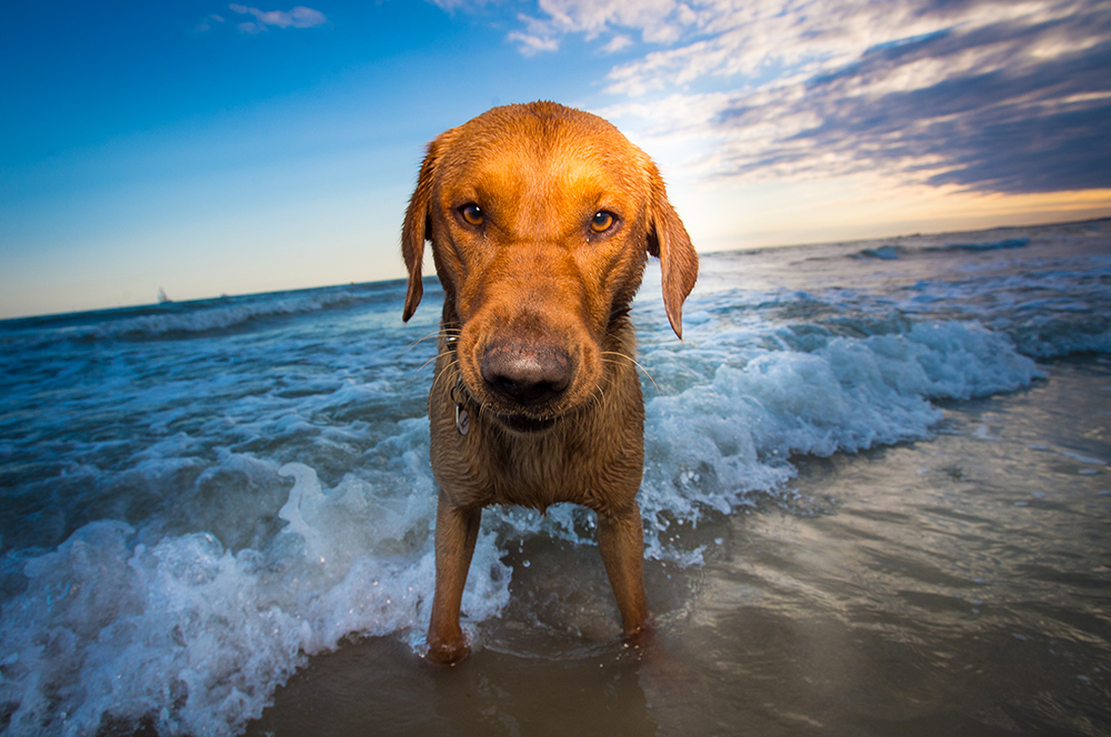 dogs at exmouth beach-rhian white photography-3.jpg