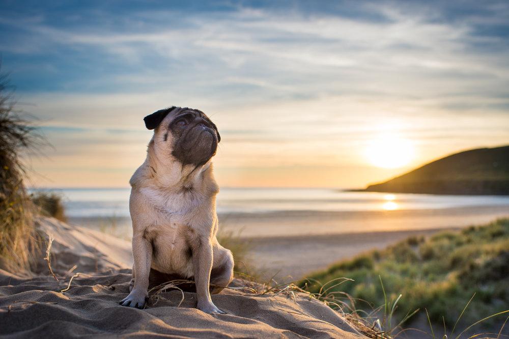 Dogs at Saunton Sands beach in North Devon
