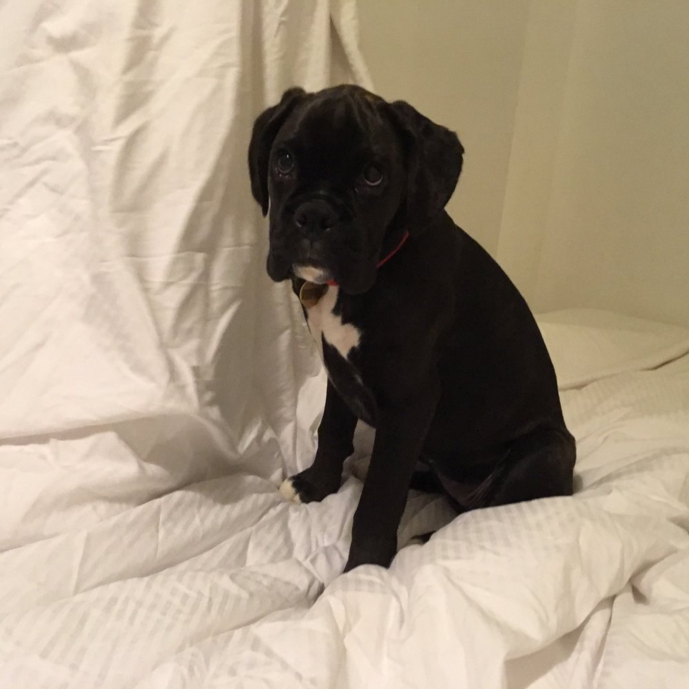 Saymor Furnishers puppy Anya sitting on a bed