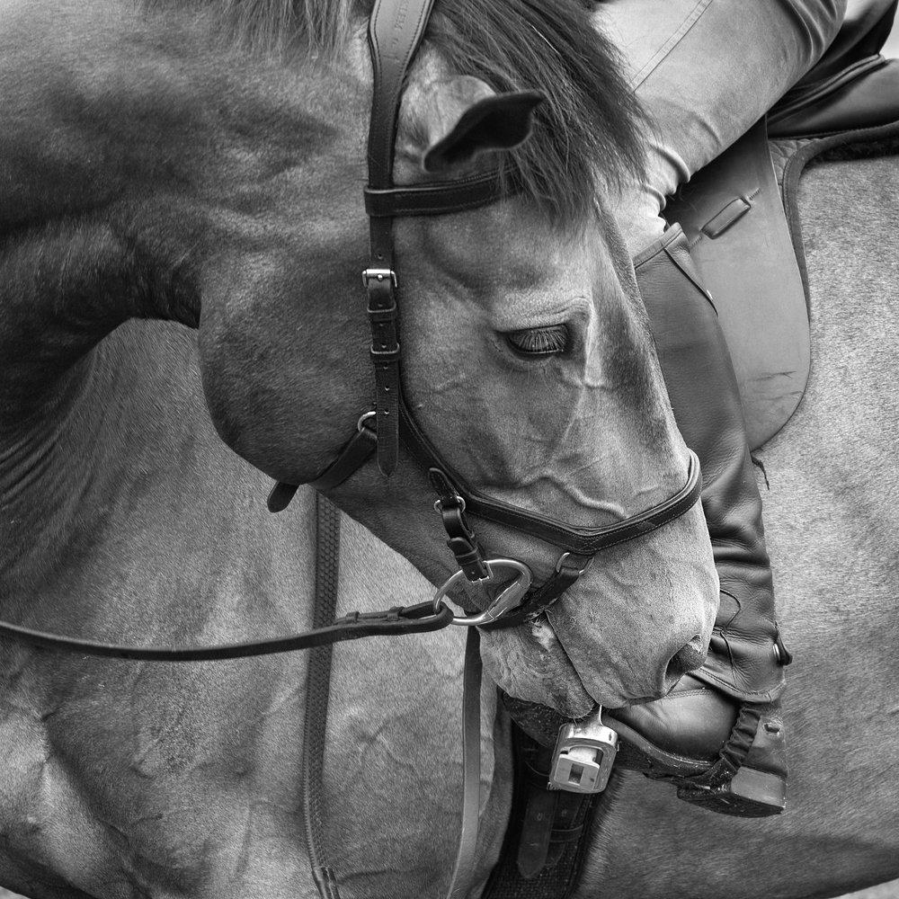 Equine_love.jpg